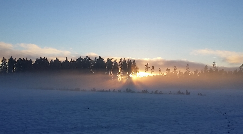 leksakscity lager vinter